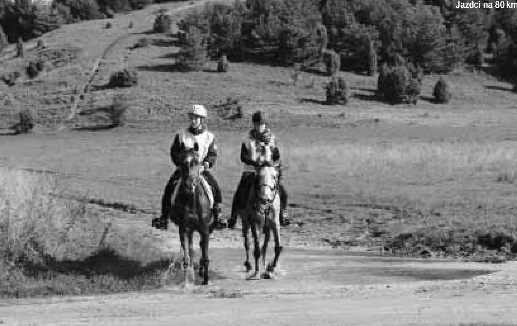 https://arabhorses.sk/z-magazinu-zivotny-styl-a-kon-cena-farmy-jack/